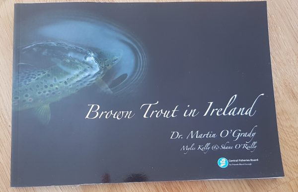 Brown Trout in Ireland